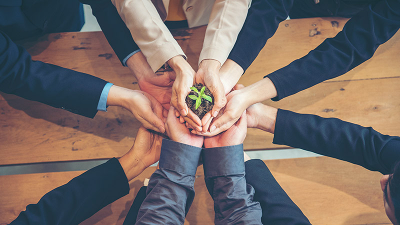 Business team with hands together holding a small plant.