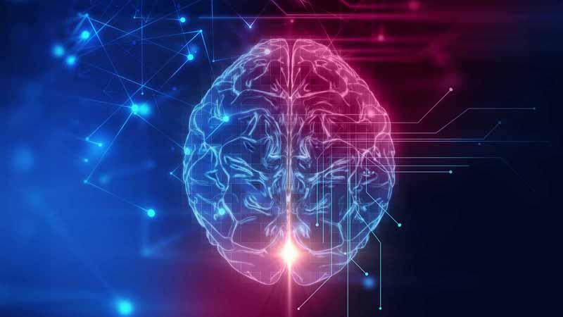 3D rendering of a brain.