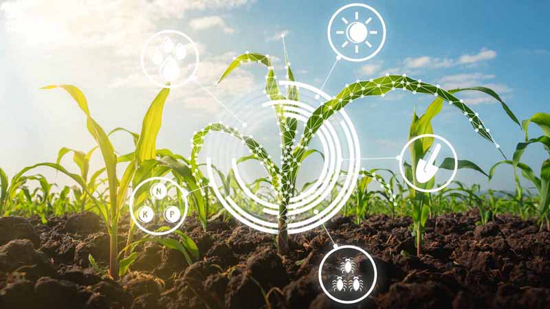 A maize seedling with technology icons.