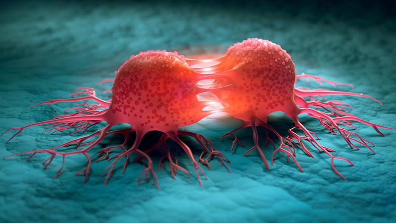 3D illustration of a dividing cancer cell.