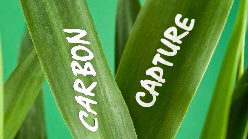 """Carbon capture"" written on plant leaves."
