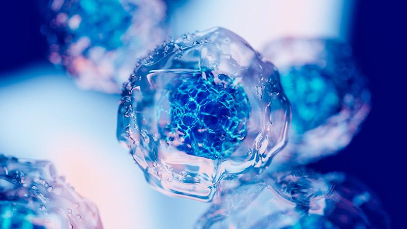 Embryonic stem cells.