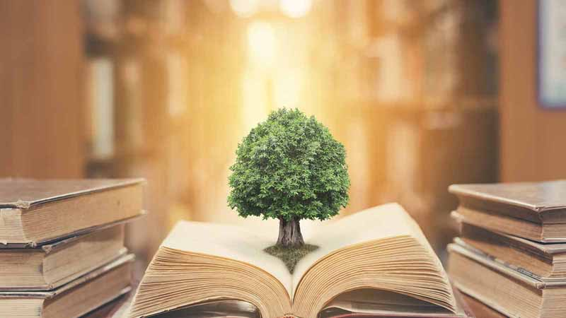 A tree growing out of a book in a library.