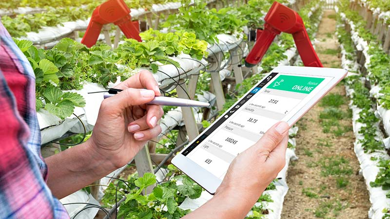 A farmer using a tablet to monitor crops.
