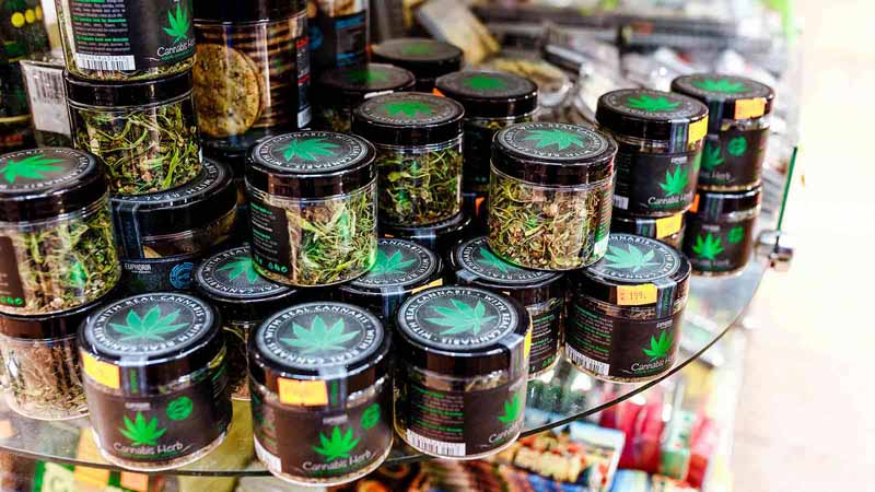 Jars of cannabis and other herbs in a store.