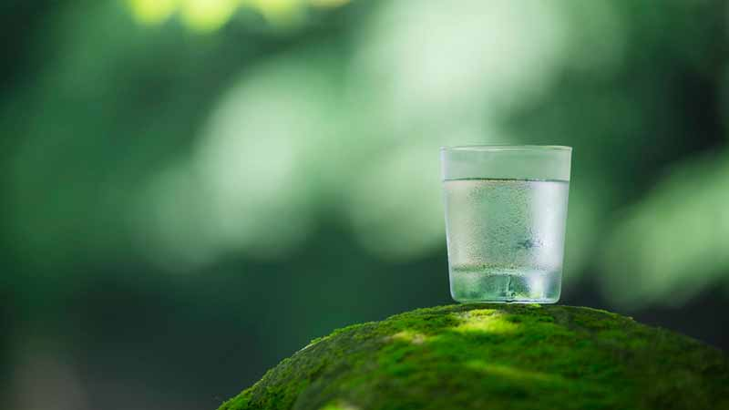 A glass of water sitting on a leaf.
