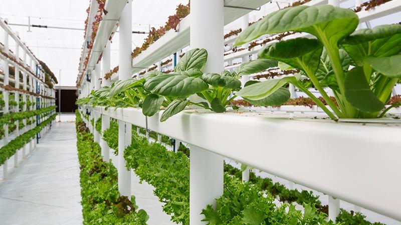 An indoor vertical farm.