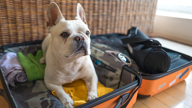 A dog sitting in a suitcase.