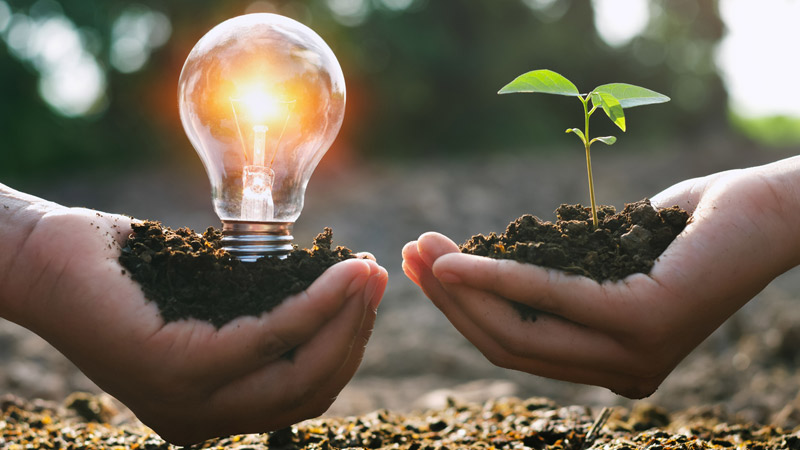 Two hands holding a lightbulb and a seedling.
