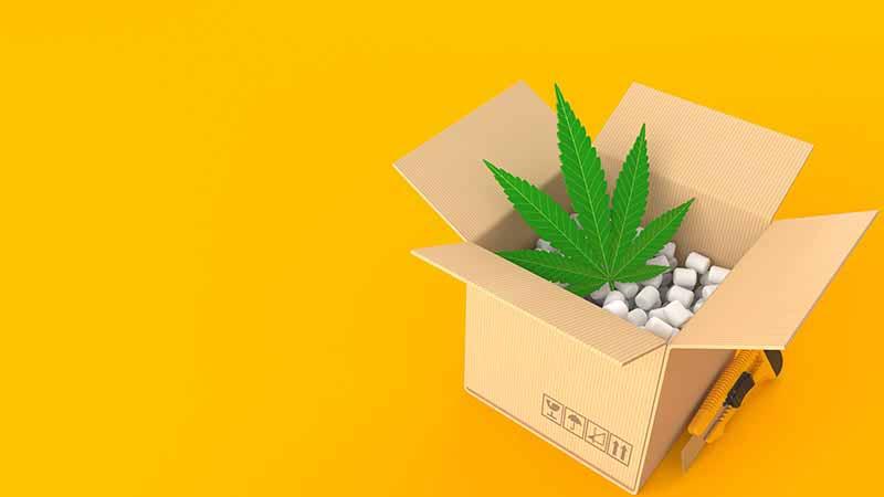 A cannabis leaf inside a cardboard packing box.
