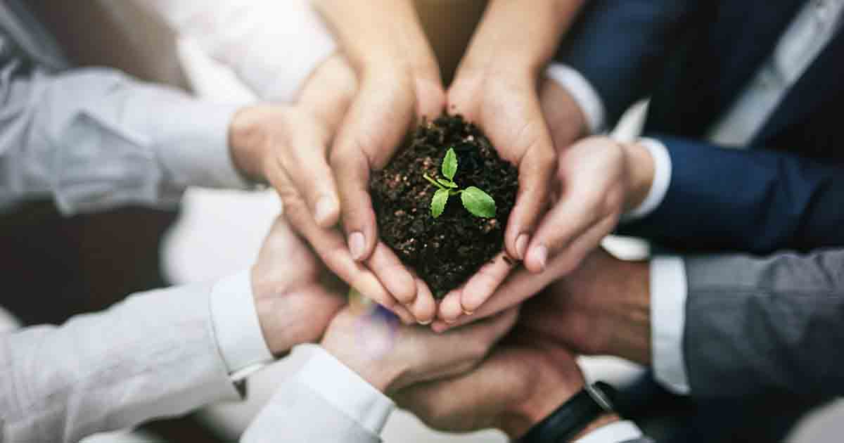 https://cdn.startupsavant.comHands holding a plant growing out of soil.